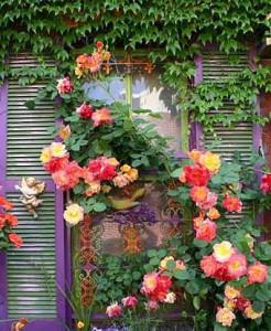яркие розы около дома