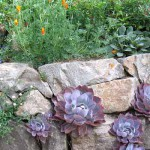 верикальная композиция из цветов на опроной стенке в саду