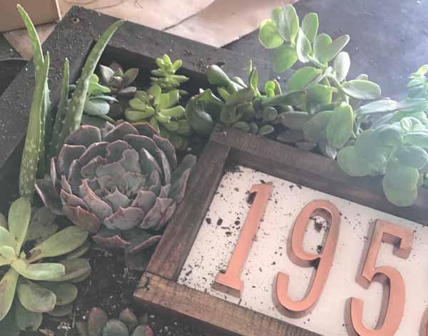 Астильба из семян в домашних условиях: подготовка 64