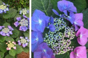 дизайн сада цветы