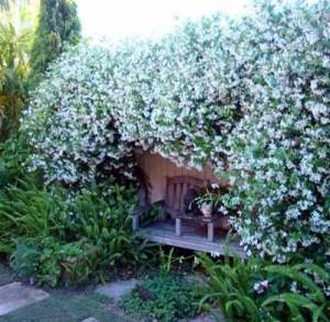 беседка с белыми цветами в саду
