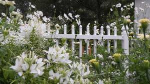 белый сад около калитки