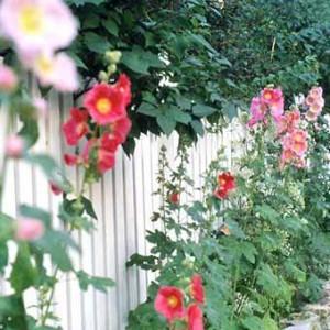 белый забор с цветами