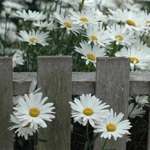 фото заборов в саду