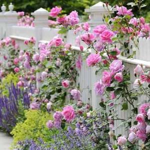 красивые фото заборов в цветах