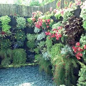 вертикальное озеленение дачных заборов фото