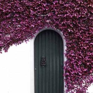обвитые цветами заборы фото