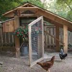 уютный курятник на даче