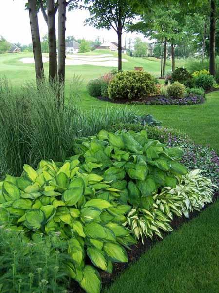 Декоративные травы в дизайне садового участка