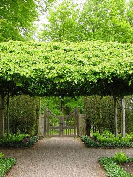 красивый дизайн сада своими руками-вход