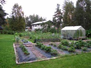 дизайн дачного участка огород