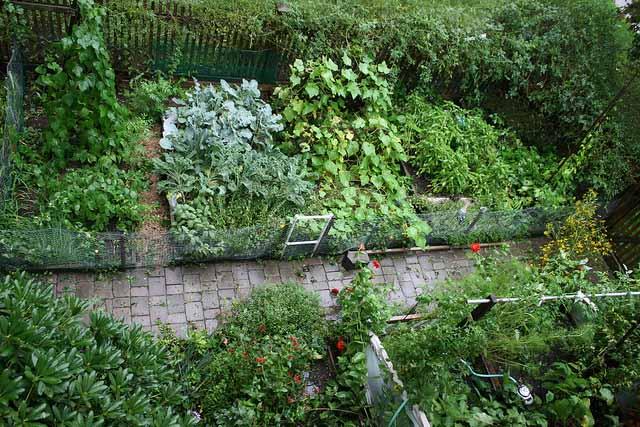 огород в дизайне дачного участка