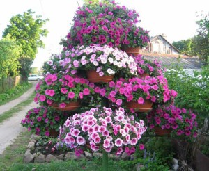 дачный участок цветник