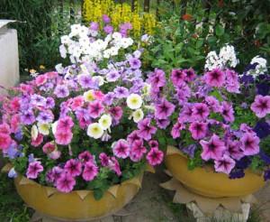 цветники из шин на дачном участке