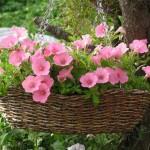 дачный участок цветы в корзинках