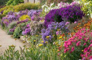 миксбордер это плотные смешанные посадки из цветов