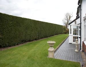 Хвойный садик - изгородь