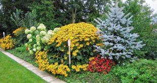 как украсить садовый участок хвойными растениями