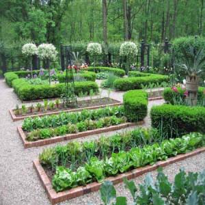 Красивые грядки - декоративный огород