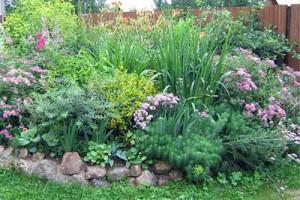 декоративные травы для клумбы