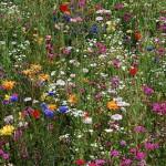 цветочный газон на даче