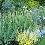 декоративные травы на садовой  клумбе