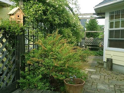 как красиво оформить забор во дворе дома