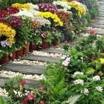 деревянная дорожка среди цветов на даче