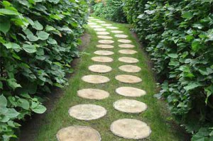 садовая дорожка из спилов дерева вариант укладки