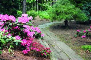 деревянная дорожка в саду