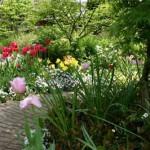 садовая дорожка среди цветов