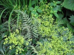 декоративные травы в ландшафтном дизайне