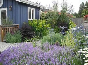 как самому красиво оформить садовый участок