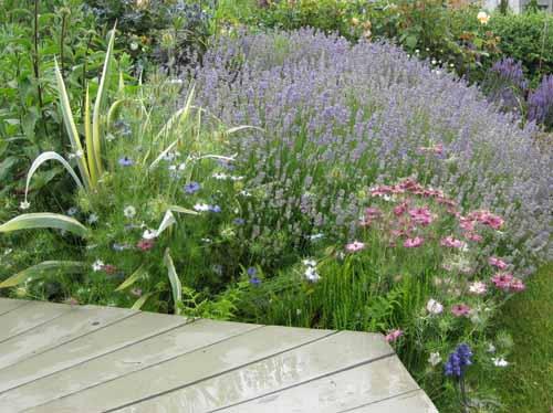 неприхотливые многолетники в дизайне сада