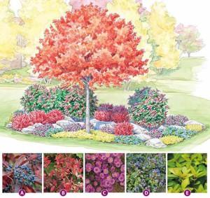 красивый осенний цветник схема