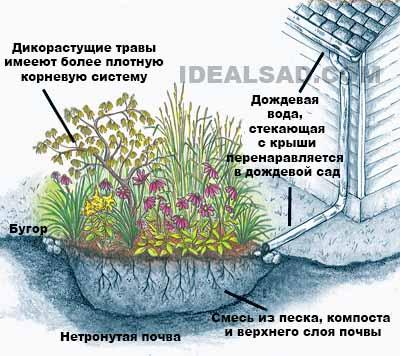 дождевой сад как способ отвода воды