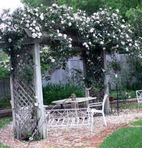 почему плетистая роза цветет только наверху куста