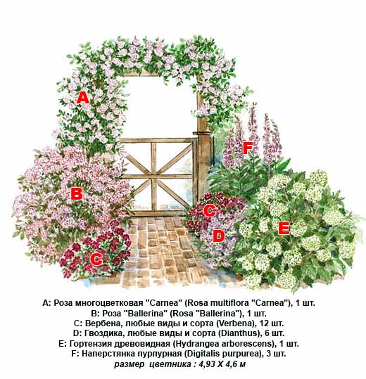 схема розария с аркой из роз