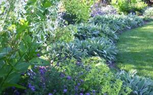 ландшафтный дизайн декоративные травы