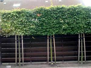 как делать высокий забор