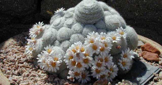экзотические растения в ландшафтном дизайне