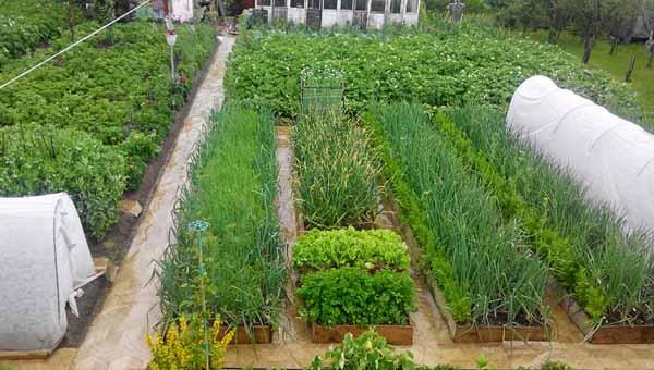 огород грядки дизайн