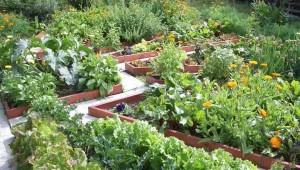 принципы красивого дизайна огорода
