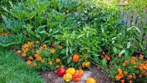 красивый огород на даче