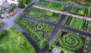 таблица совместимости растений на огороде