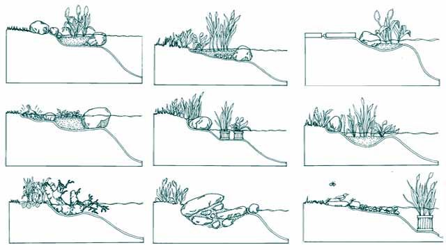 варианты берега пруда