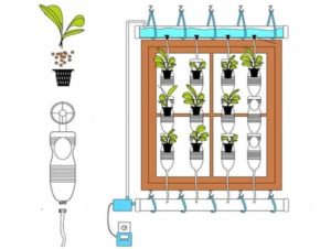 вертикальное озеленение схема
