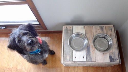 подставка для мисок для собак своими руками