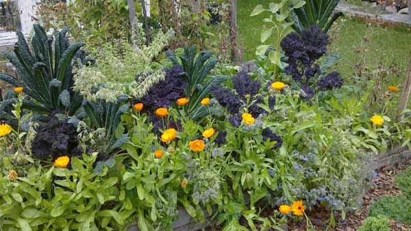 обустройство участка красивый огород