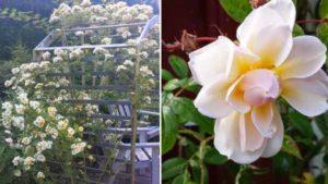 обустройство участка беседка в розах